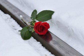 red-rose-3928751_1920