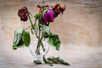 flower-316437_640